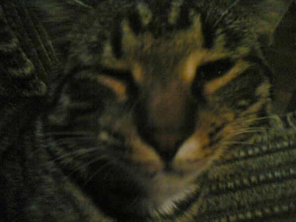 Прикрепленное изображение: Укуренный_кот.JPG