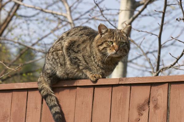Прикрепленное изображение: cat1.jpg