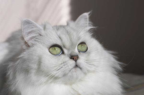 Прикрепленное изображение: cat2.jpg